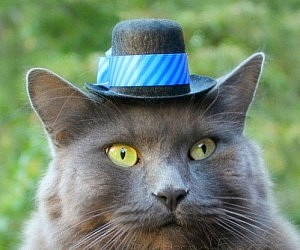 hats-for-cats1-300x250.jpg